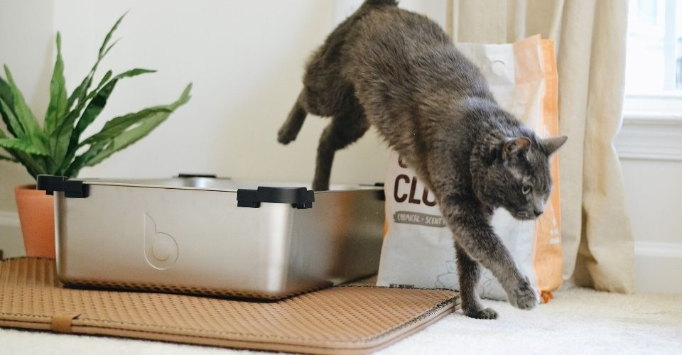 how to get rid of cat pee smell?