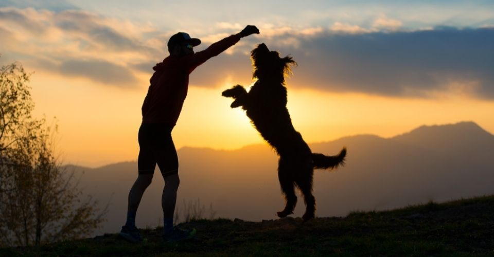 How to train a guard dog?-keeping-pet