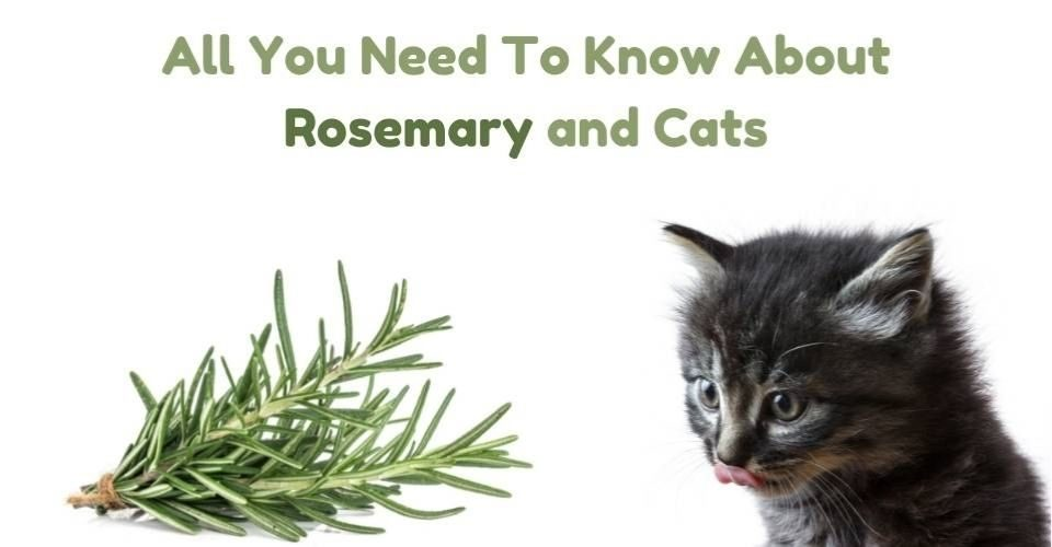 Is Rosemary Safe for Cats