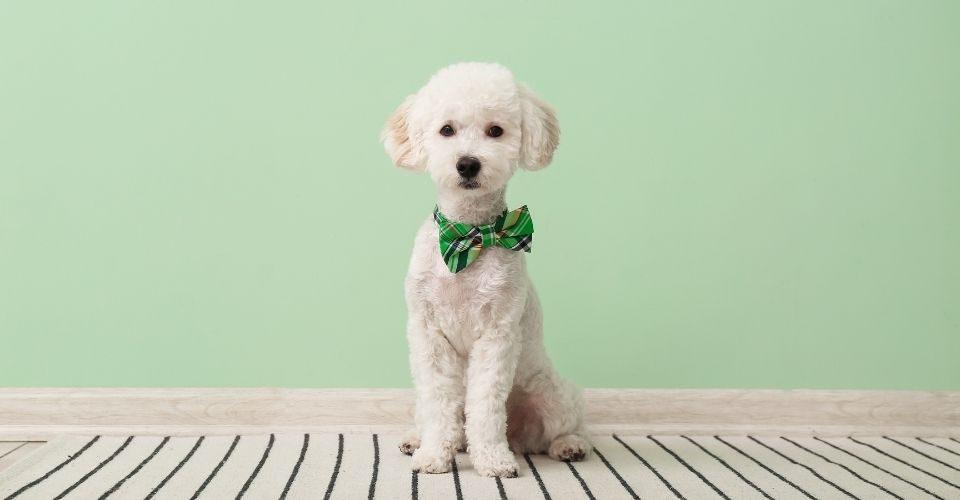 Italian Dog Names - keeping pet