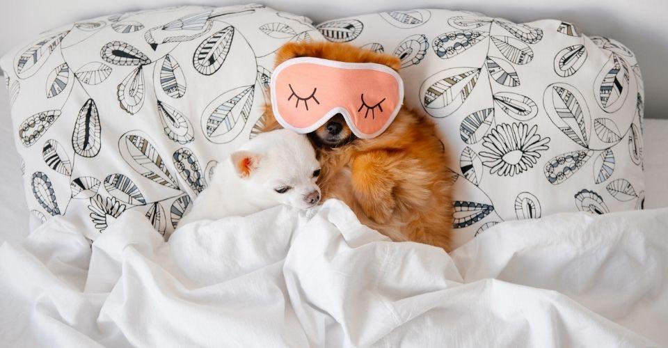 Do Puppies Sleep A Lot