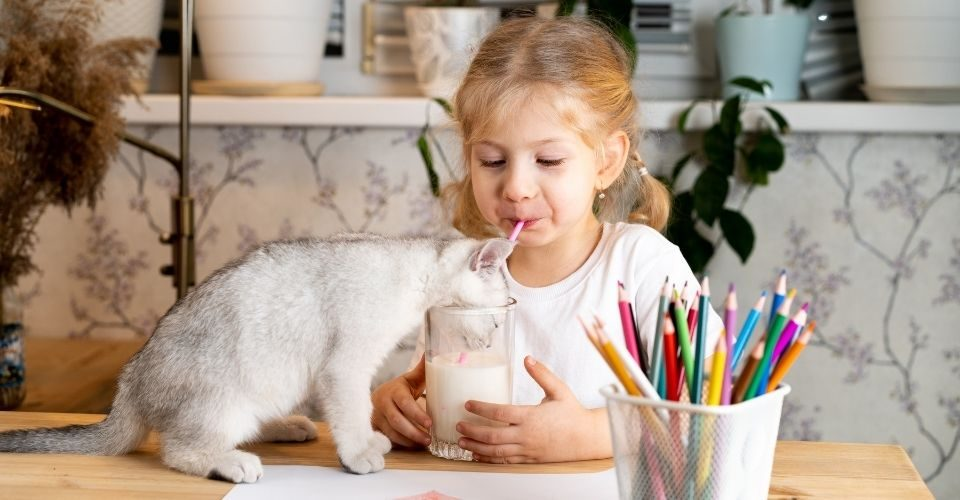 Can cats drink almond milk-keeping-pet