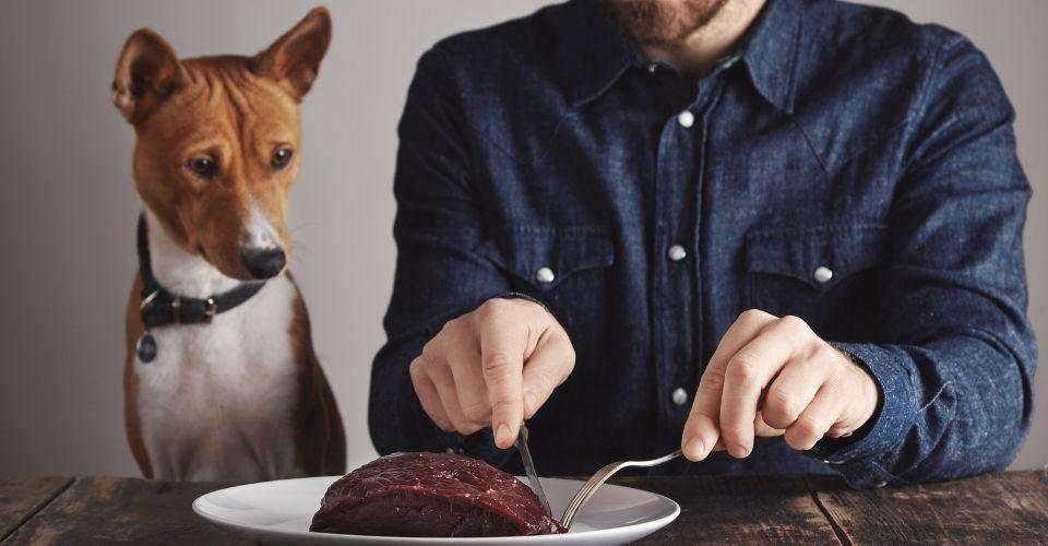 can dog eat human food-keeping-pet