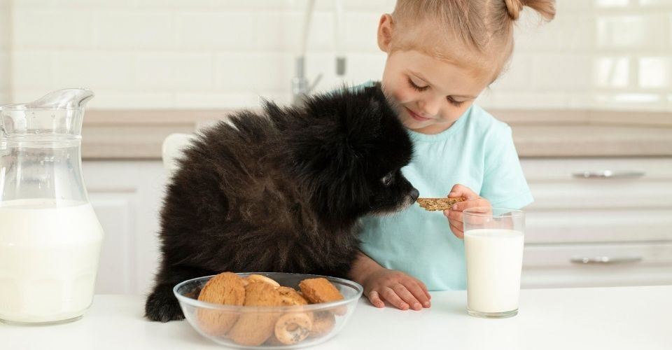 Can dogs have milk