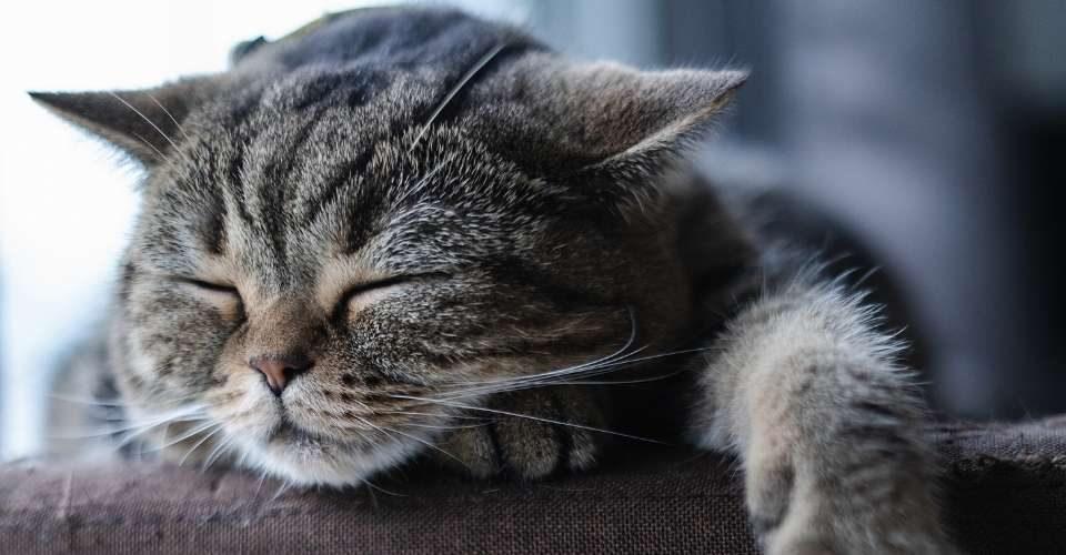 cat snoring - keeping pet