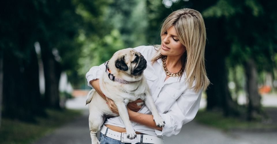 Dog Breeds For First Time Owners-keeping-pet