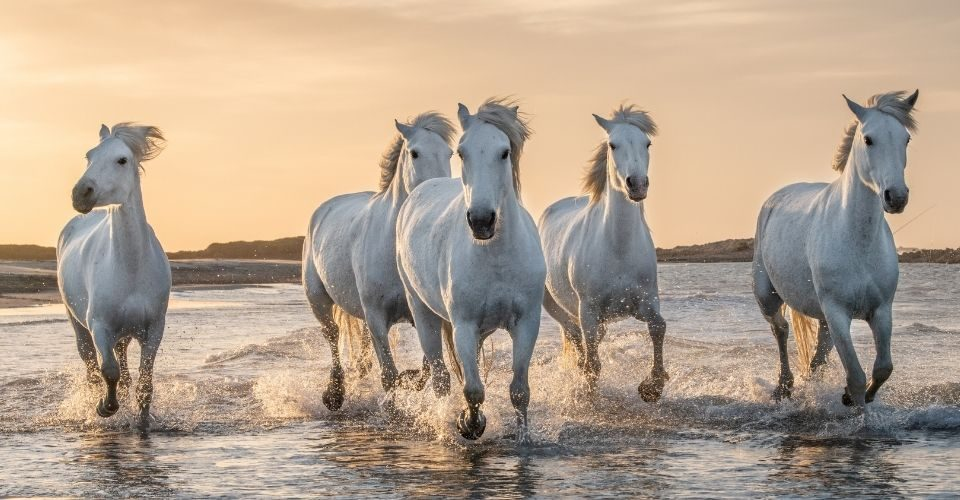 how many breeds of horses are there
