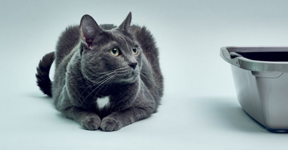 Kitten Not Using Litter Box-Keeping-pet