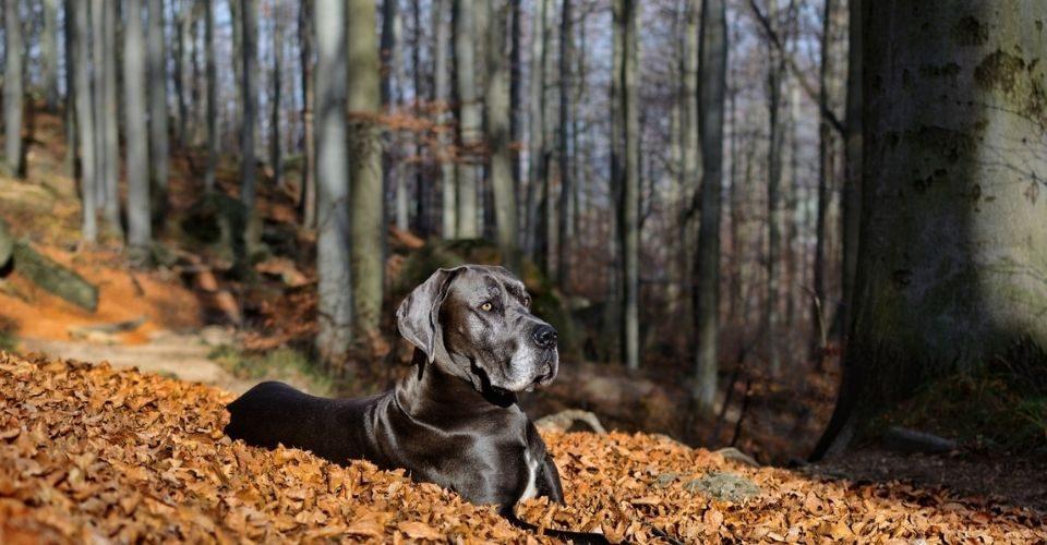 top 10 tall dog breeds